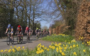 Lead group pass daffodils on the Radford Road fpr the second time